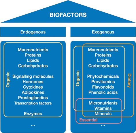 Biofactors definition